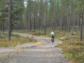 Pine forest. Vittangi, Sweden