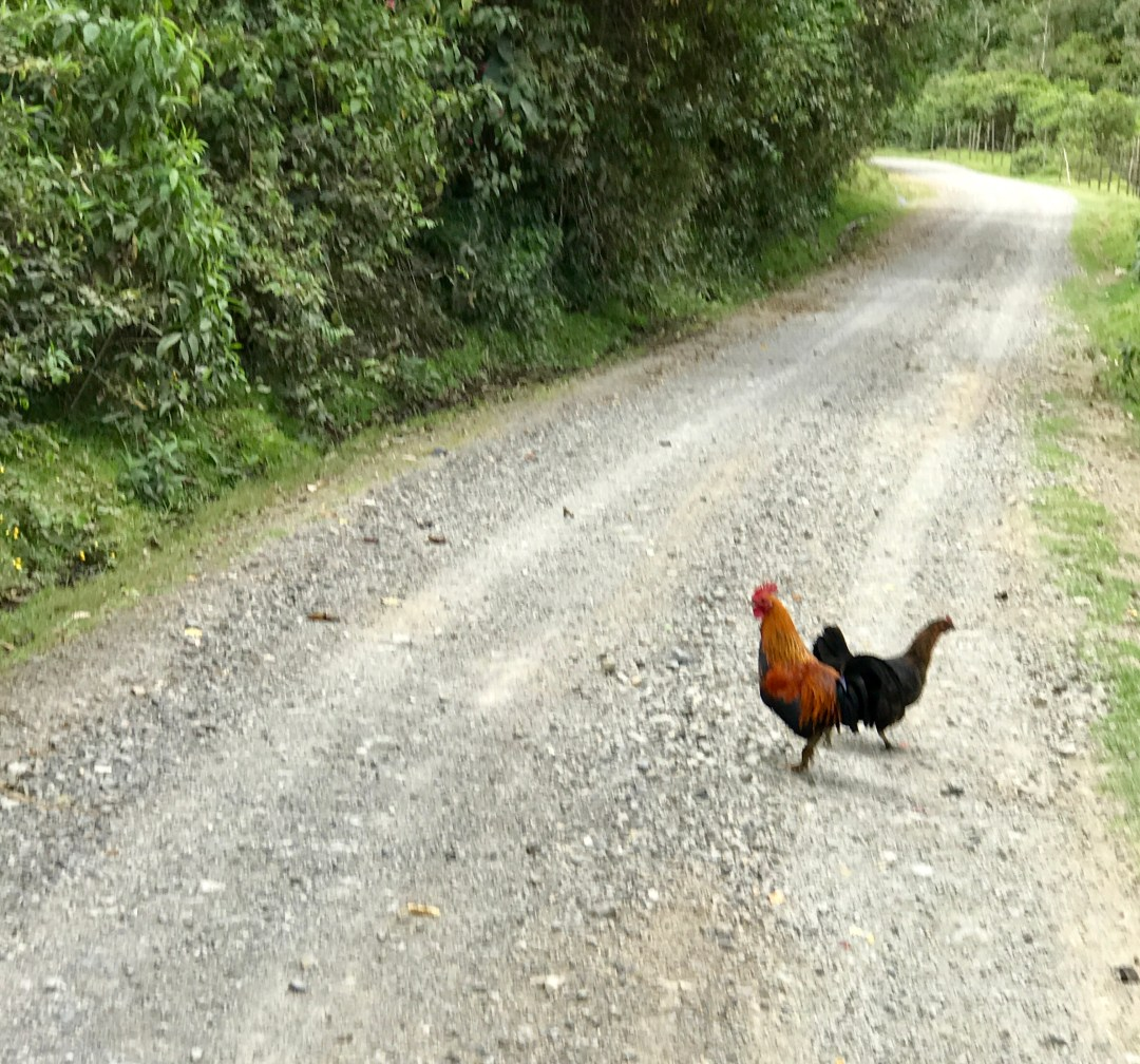 Road Hazards, Ecuador