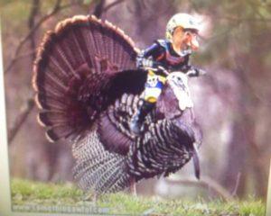 turkey-ride