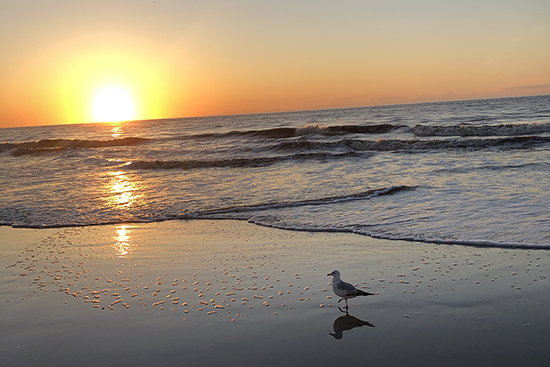 Sunrise-Atlantic Ocean - Seagull East Beach on St. Simons Island