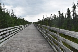 Elevated Platform over Swamp on the Mountain Bay Trail
