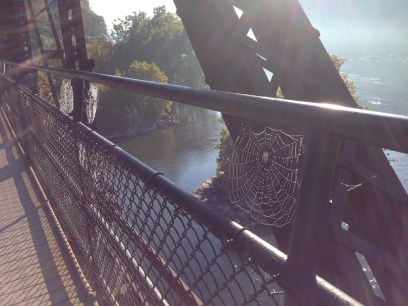 As I crossed the Potomac in the morning to return to the towpath, the low sunlight lit up countless spider webs on the railroad bridge.