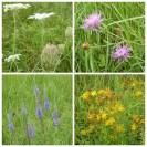 Elbe flowers Coswig