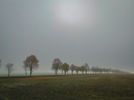 Cold and foggy