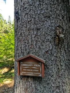 Cimrman's tree