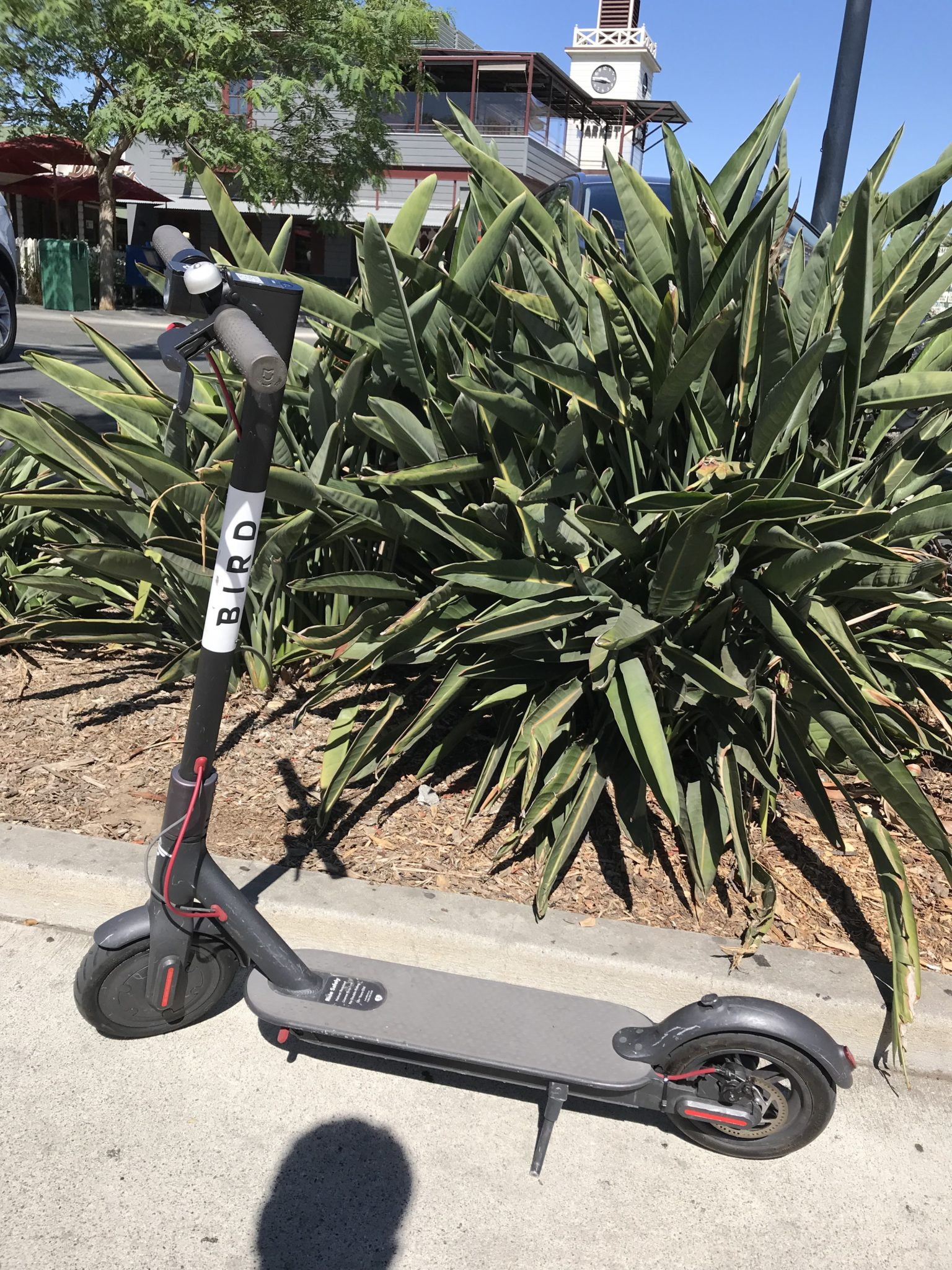 Morning Links: Scooter no more — Bird and Lime get the boot from LA