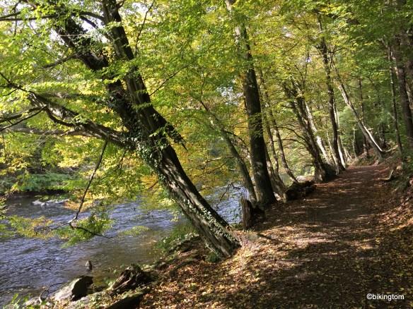 Farbenprächtiger Weg direkt am Ufer der Wupper.