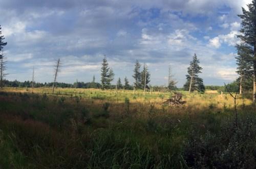 bikingtom im Nationalpark Thy