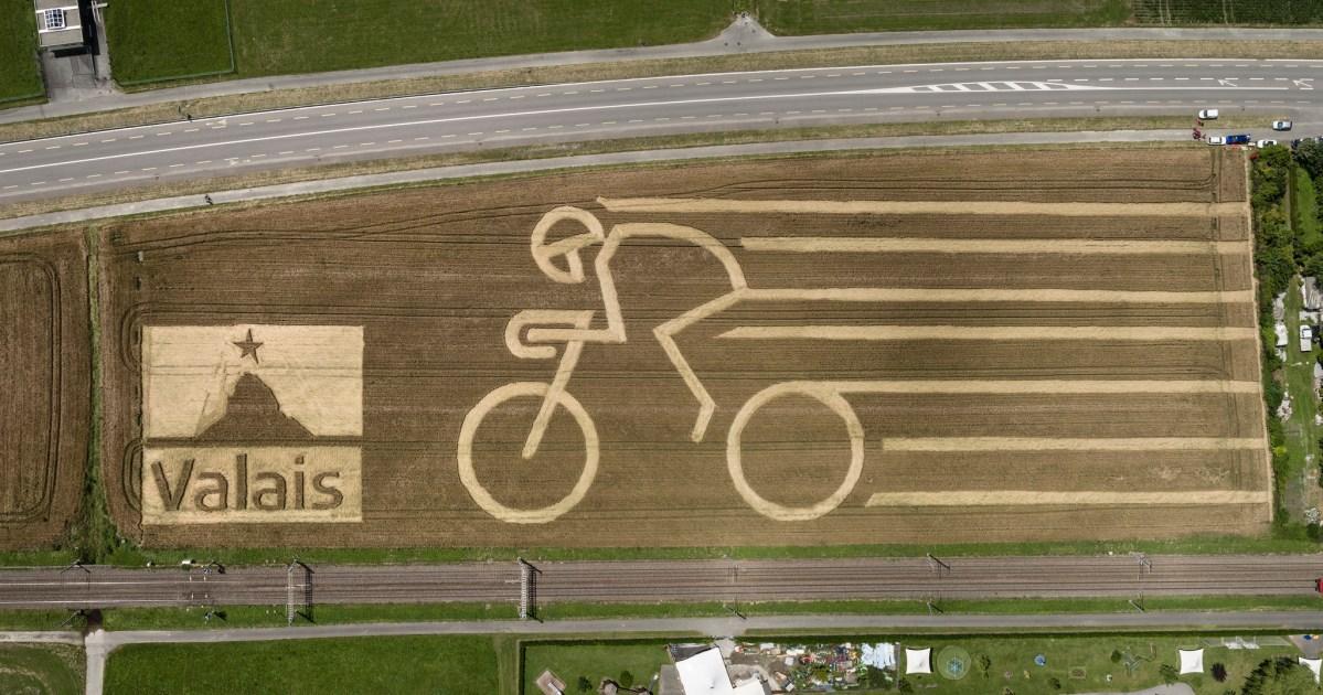 Une fresque géante dans le blé pour accueillir le Tour de France