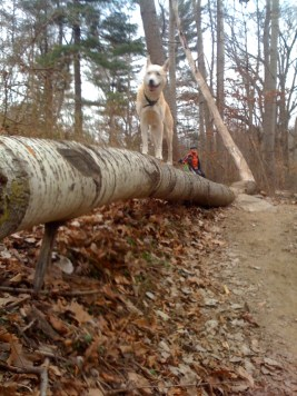 Log ride by Lou Dog