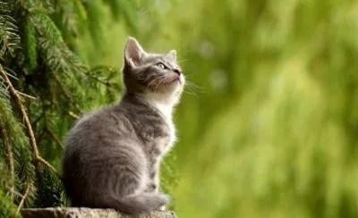岩合光昭の世界ネコ歩きの再放送はいつ?見逃した過去の動画を見る方法 ...