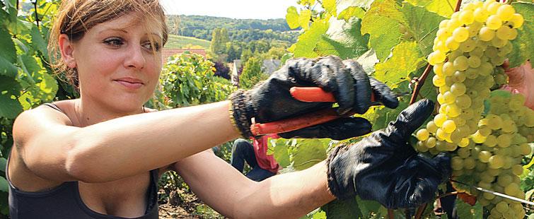 Gode handsker beskytter hænderne for rifter og insektbid