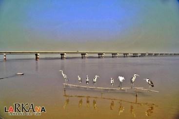 @Sindhleak #Larkana Floating Bridge on #Darya-e-Sindh #Sindh #BeautifulPakistan