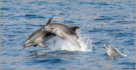 Lurgaia te ofrece la oportunidad de ver cetáceos y aves marinas
