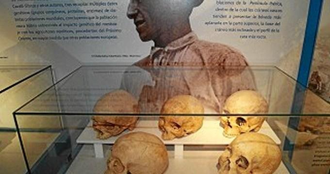 Arkeologi Museoa ofrece una visita guiada para conocer los detalles de la exposición 'Escrito en los huesos'