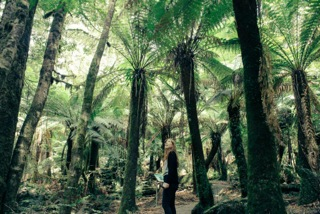 Giant man ferns in the Styx Valley_Tasmania.jpeg