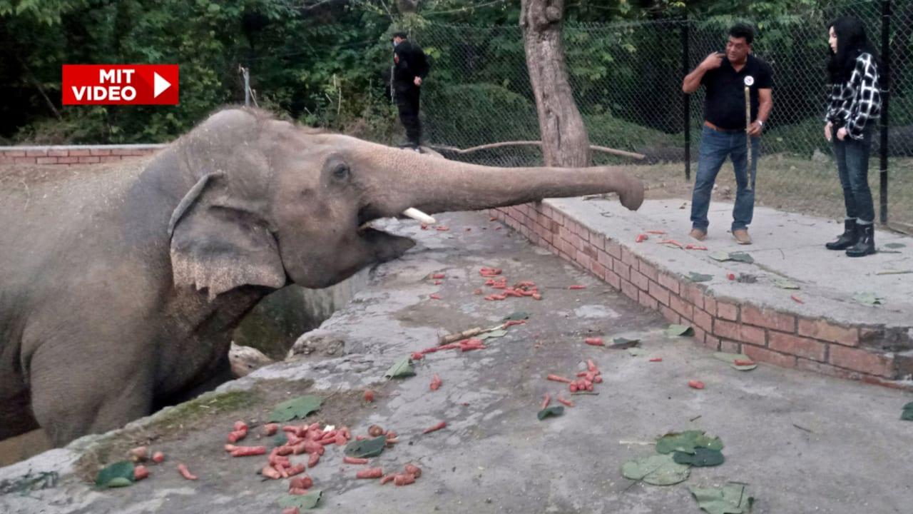Elefant Kaavan in Kambodscha angekommen | In-/Ausland