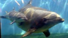 Freie Bahn für schlaue Schwimmer: Menschenrechte für Delfine?