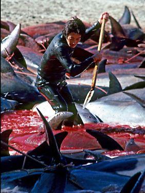 Erst durch einen Dokumentarfilm wurde das grausame Abschlachten der Tiere belegt.
