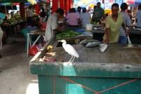 Fischmarkt Mahe
