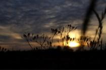 Gewächs im Sonnenuntergang