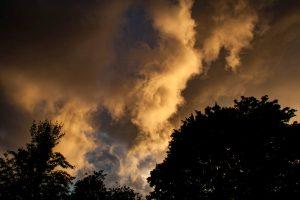 Wolken über der Baumkrone