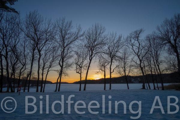 Träd vid sjö om vintern