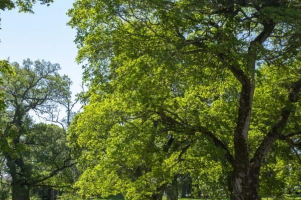 Park med träd