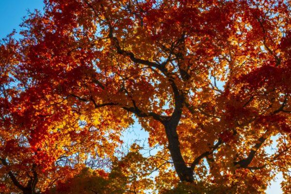 Höstfärger i träd