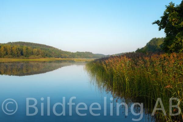 Morgon vid sjön