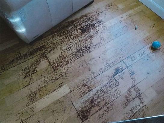 Bild från djurskyddskontrollen. Urinfläckar på vardagsrumsgolvet.