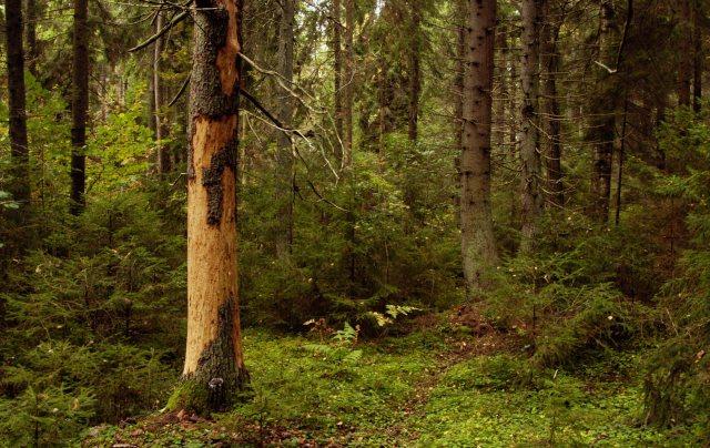 Landskapet borde väl kunna funka för deckare? Eller kanske ännu bättre för modern skräcklitteratur, som i Madeleine Bäcks romantrilogi. Foto: Magnus Alm
