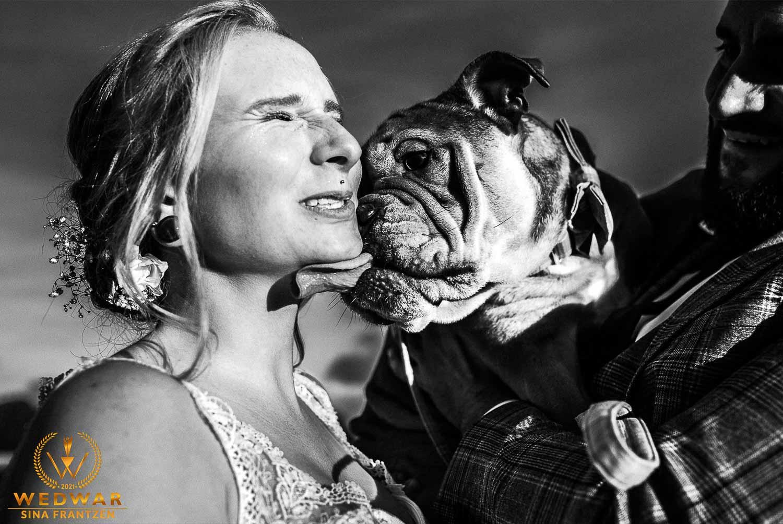 Braut wird von ihrer Bulldogge durchs Gesicht geleckt - Gewinnerbild Wedwar Award