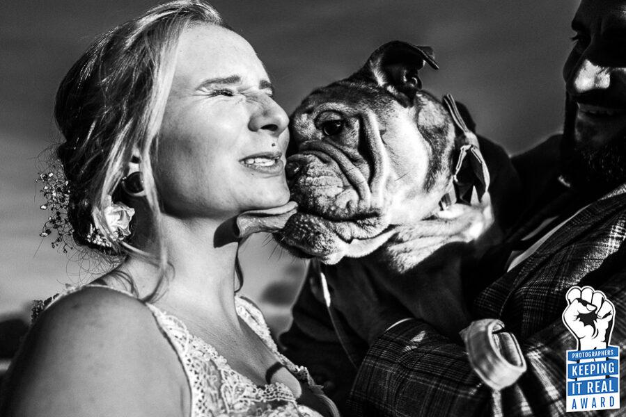 Braut wird von ihrer Bulldogge durchs Gesicht geleckt - Gewinnerbild Photographers keeping it real Award