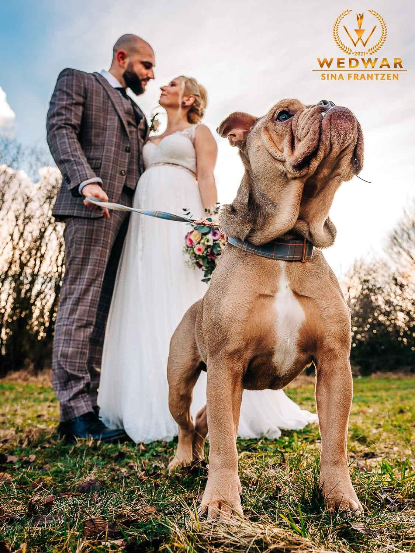 Bulldogge steht stolz vorm Brautpaar . Gewinnerbild Wedwar Awards C16 als Hochzeitsfotografin Remscheid