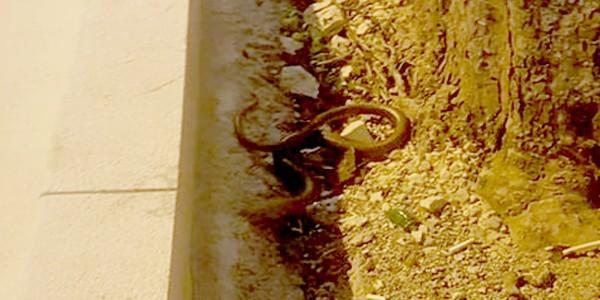 Yılan zannedilip öldürüldü