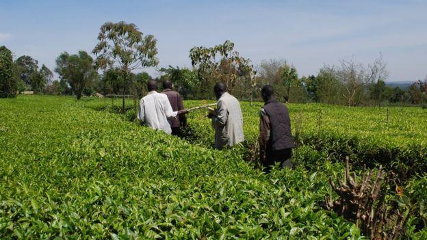 Afrika'daki insanların büyük çoğunluğu geçimini çiftçilikten sağlar