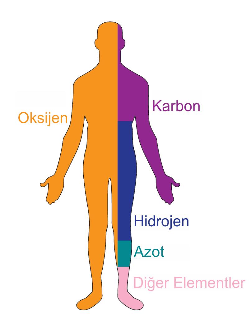 İnsan ve bedeni ne oluşur