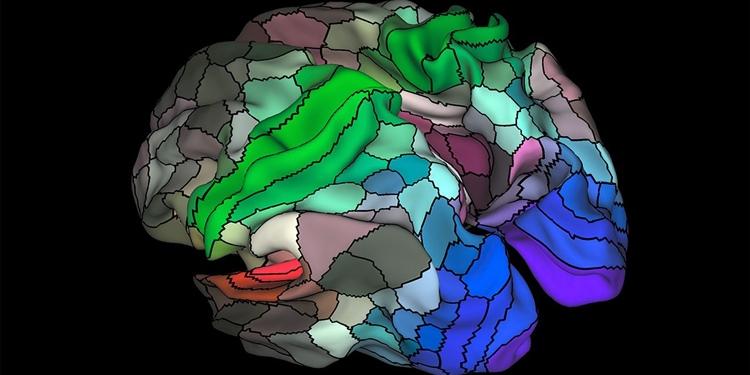 Güncellenen Beyin Haritasında 100 Yeni Bölge Keşfedildi