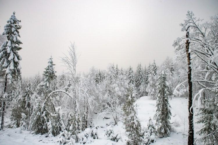Mosvatn på vinteren, Oslo
