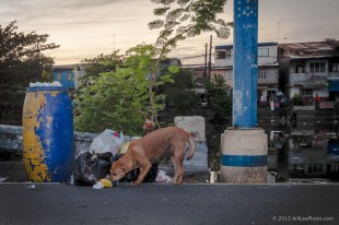 IMG_9602---copyright-201301__dog__Manila__Philippines__river__travel