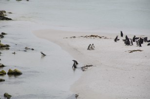 Falklands-1