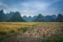 rice-straw-karst-guilin-china