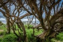 yallingup-beach-trees-western-australia