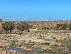 The Galana - crocodile love these flat rocks