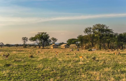 serengeti-paige-shaw-September 19, 2021-32