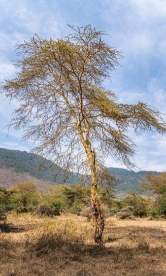 ngorongoro-crater-paige-shaw-September 19, 2021-4