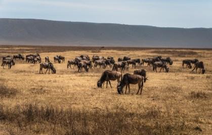 ngorongoro-crater-paige-shaw-September 19, 2021-8