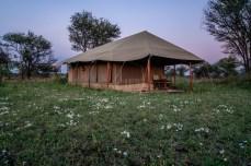 serengeti-paige-shaw-September 19, 2021-10