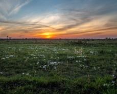 serengeti-paige-shaw-September 19, 2021-9